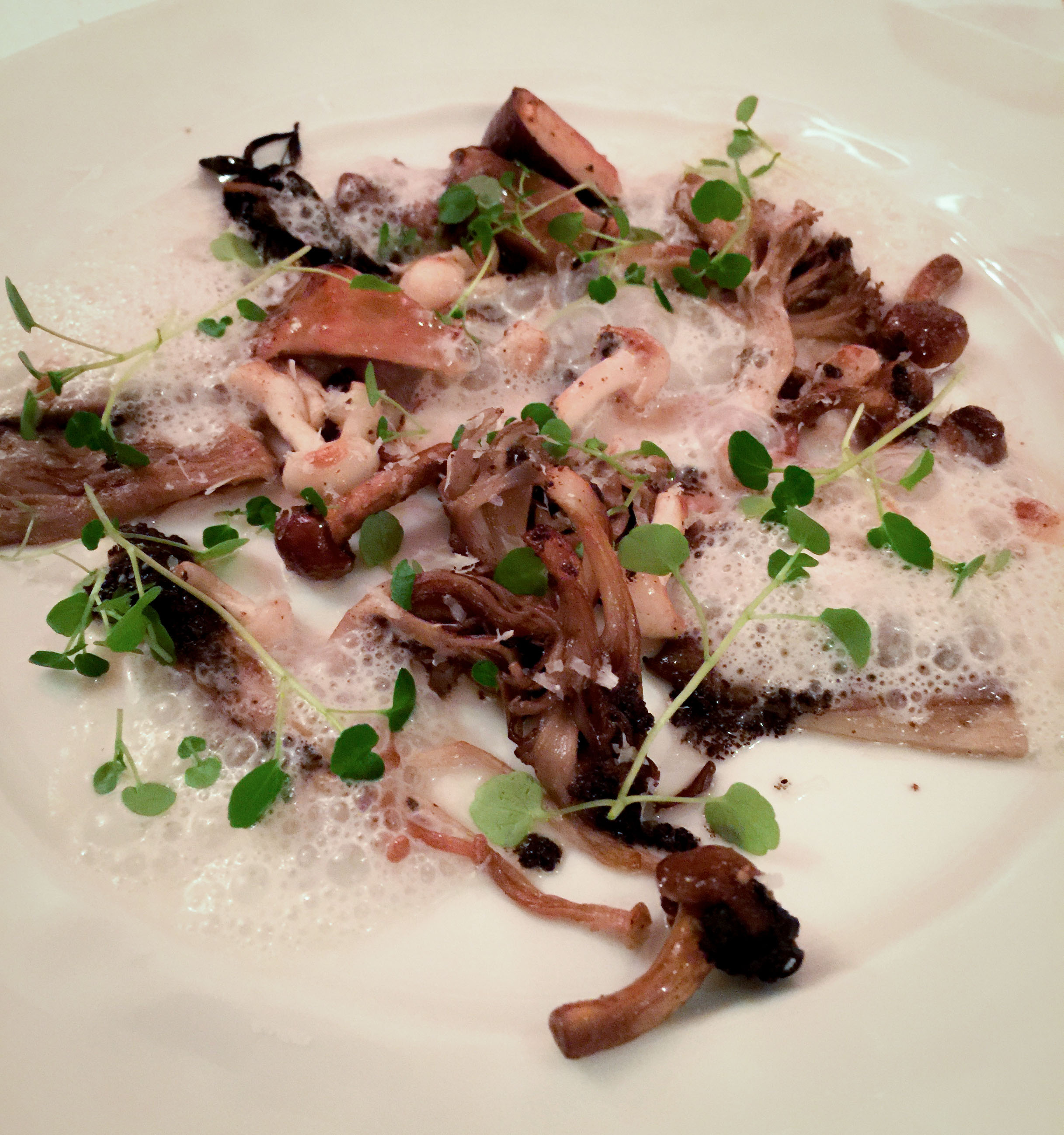 Wild mushrooms with grilled toro