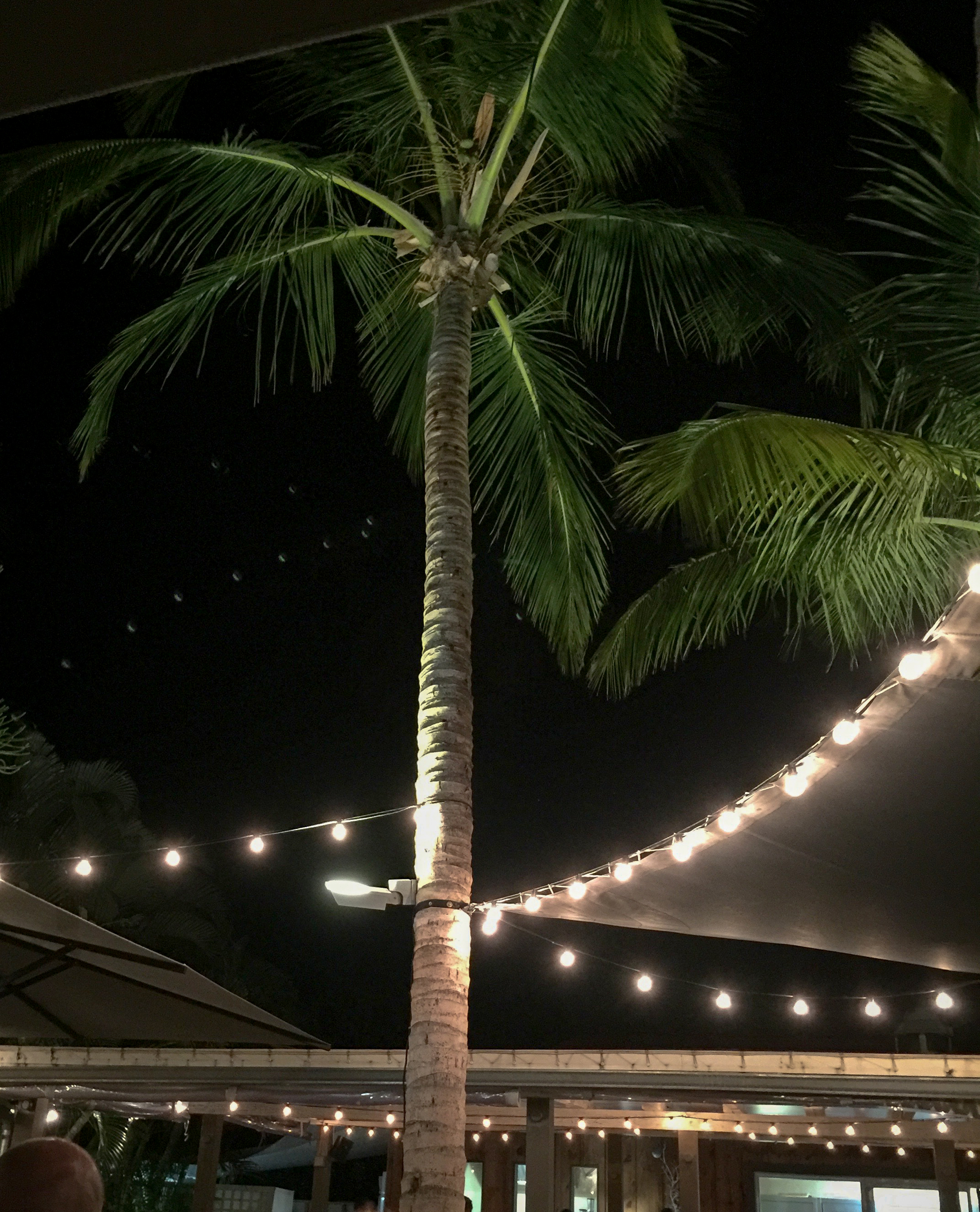 Dining under a palm tree at L'Esprit